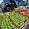 Kupujemo prskani albanski paradajz, nekvalitetne bugarske jabuke i grčke nektarine, a domaće voće i povrće PROPADA